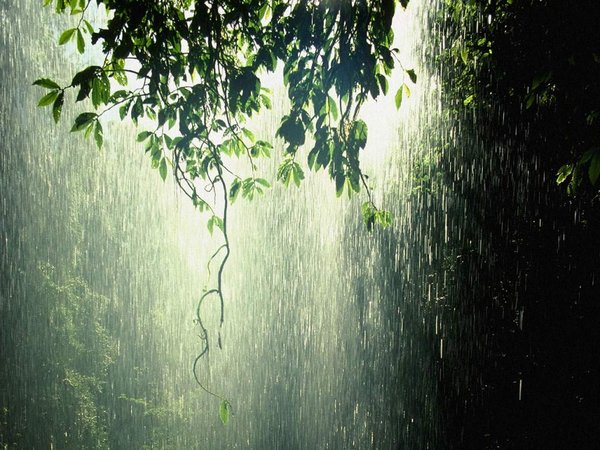 20+ Beautiful Collection Of Rain Photography 10