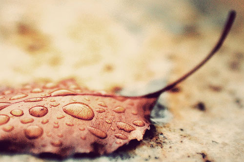 20+ Beautiful Collection Of Rain Photography 14