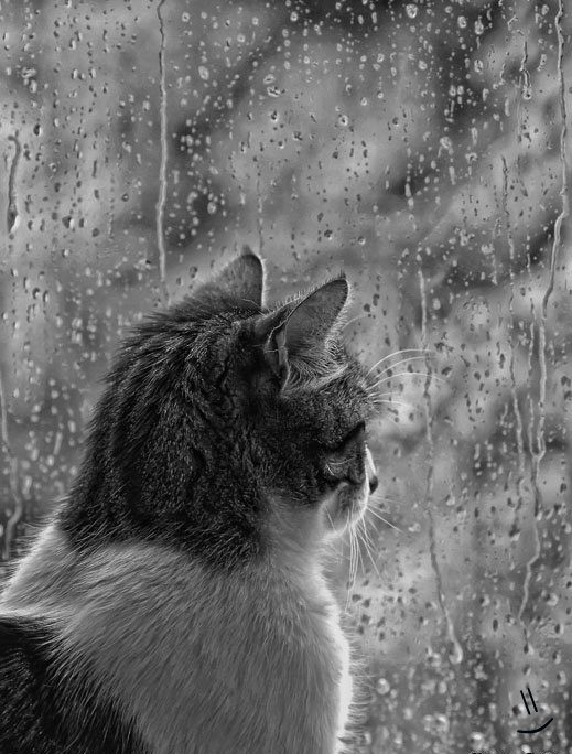 20+ Beautiful Collection Of Rain Photography 9