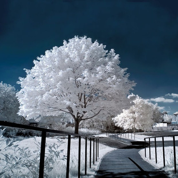 30 Beautiful Examples Of Infrared Photography 2