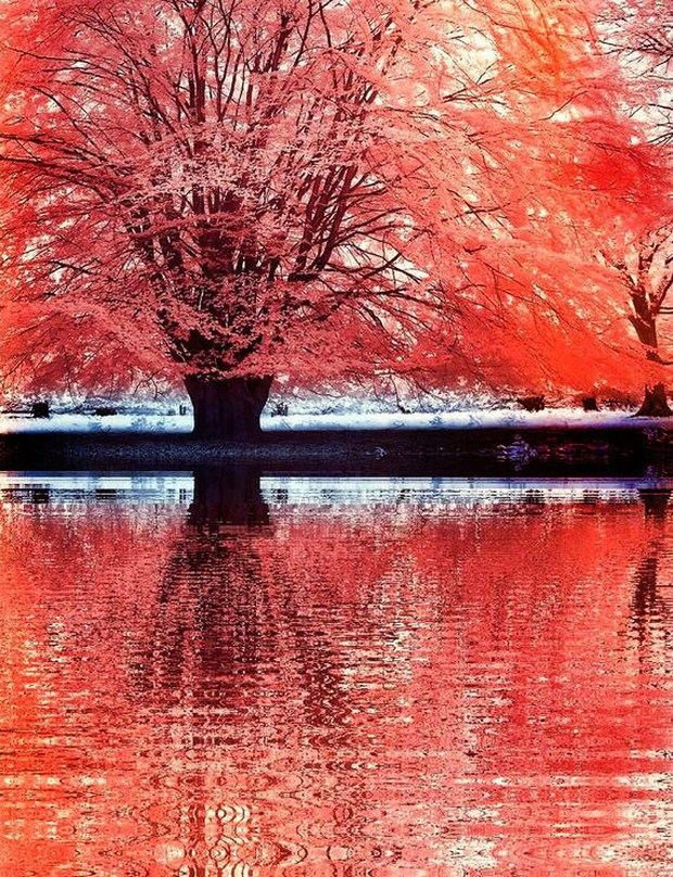 30 Beautiful Examples Of Infrared Photography 21