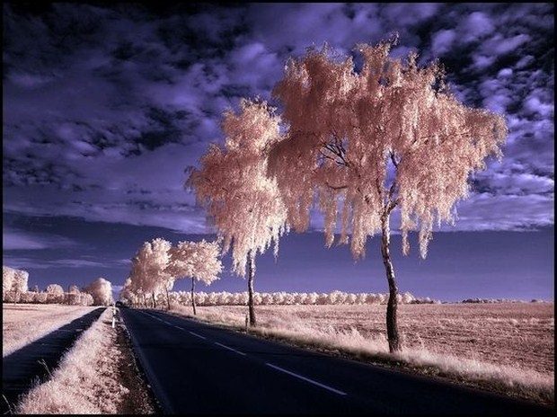 30 Beautiful Examples Of Infrared Photography 27