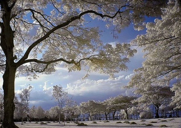 30 Beautiful Examples Of Infrared Photography 6