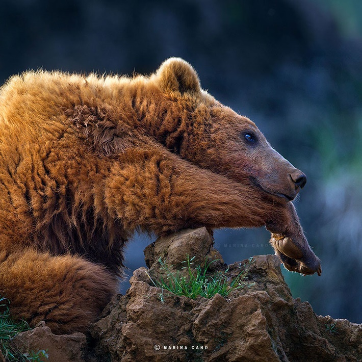 Splendid-Wild-Animals-Photos-by-Marina Cano-15