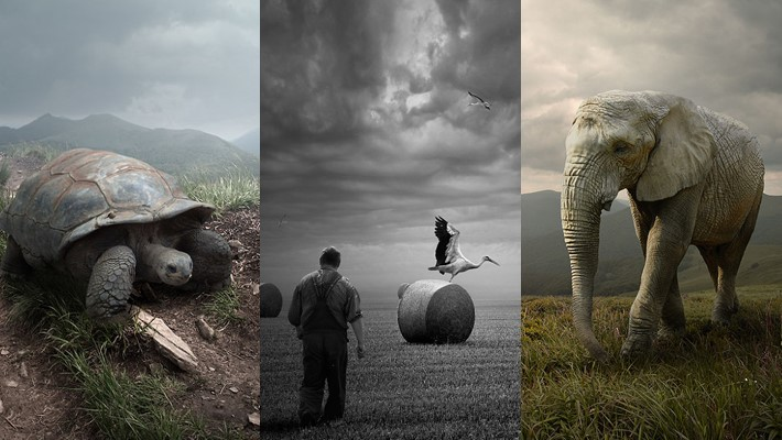 Surreal Portraits of Animals by Tomek Zaczeniuk