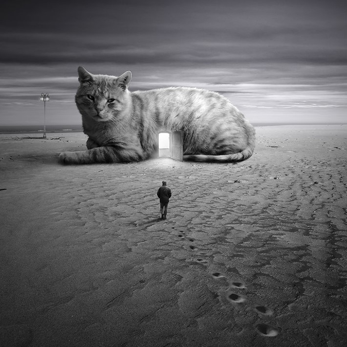 Surreal_Portraits_of_Animals_by_Tomek_Zaczeniuk