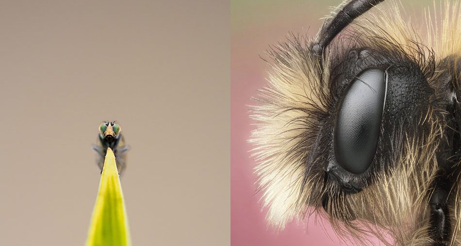 Macro Photography Ideas
