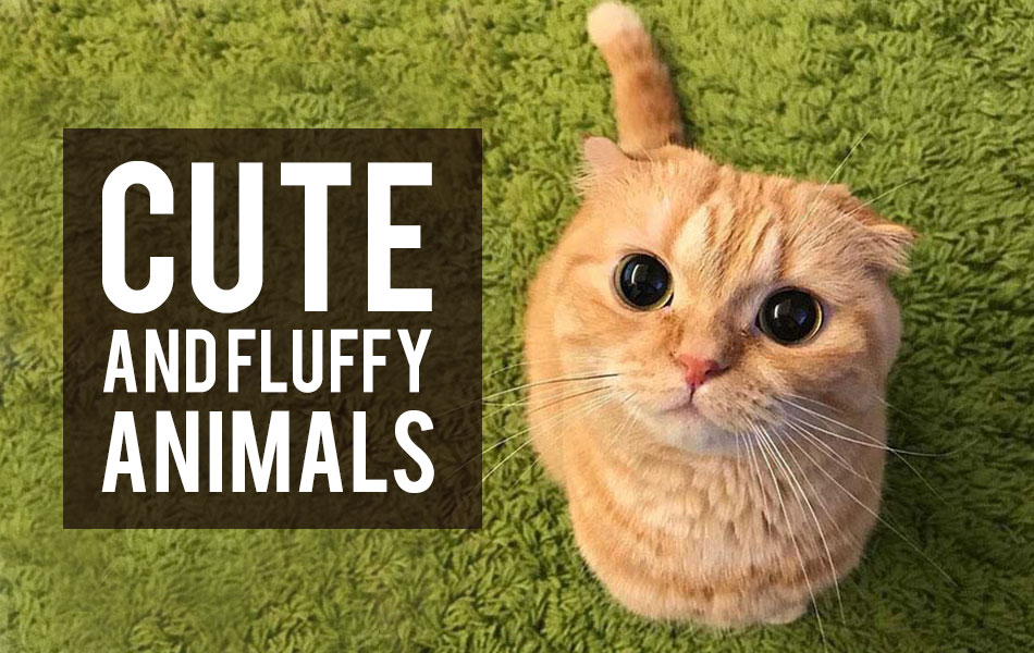 Cute and fluffy animals